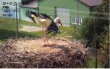 http://www.allegaleria.pl/images/4fejmcpg3lkphmudorbf_thumb.jpg