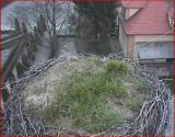 http://www.allegaleria.pl/images/4p6gj57i11pcxwph3sby_thumb.jpg