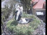 http://www.allegaleria.pl/images/h3kgb1lkyfsnksmtoivk_thumb.jpg