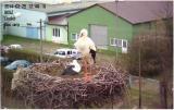 http://www.allegaleria.pl/images/lb0iqr9e769c9q2dyz_thumb.jpg