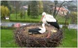 http://www.allegaleria.pl/images/p7s72gck9llnj5t6pnt_thumb.jpg