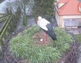 http://www.allegaleria.pl/images/r6ppdnj860imd8rbvh2u_thumb.jpg