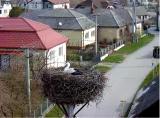 http://www.allegaleria.pl/images/ujktkrp55699epbmct8_thumb.jpg