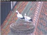 http://www.allegaleria.pl/images/z6aikfoe80ym6rruek_thumb.jpg